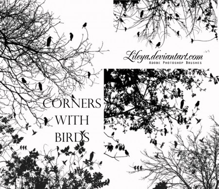 Free Corners with Birds