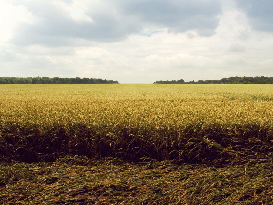 Free Photos: Laid wheat in a field | Nature | Cornelia Büchse