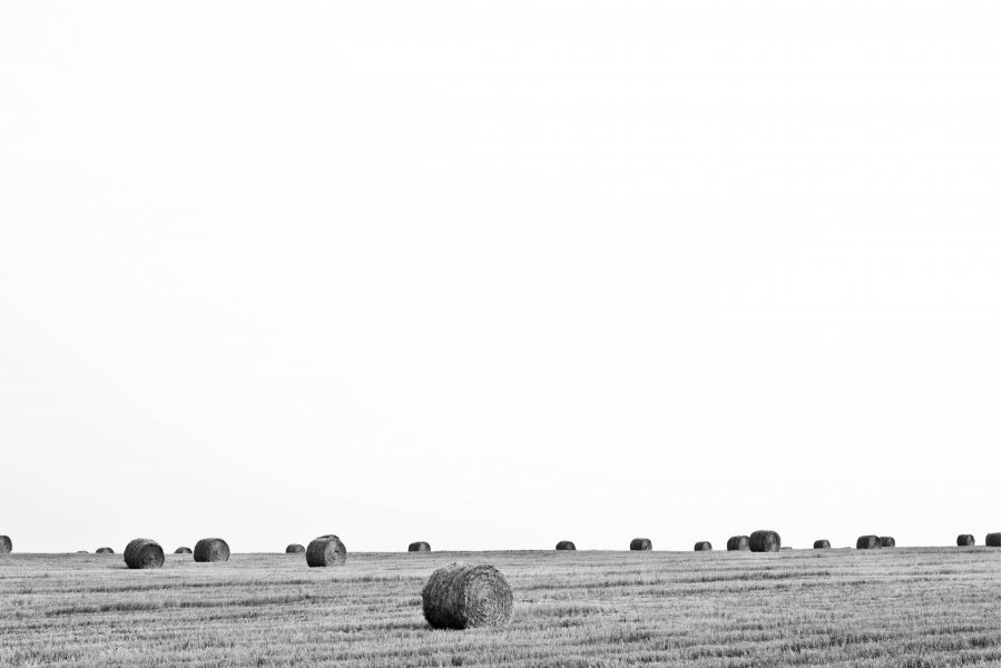Free Photos: Wheat ballots on the field | Nature | Pavel Voinov