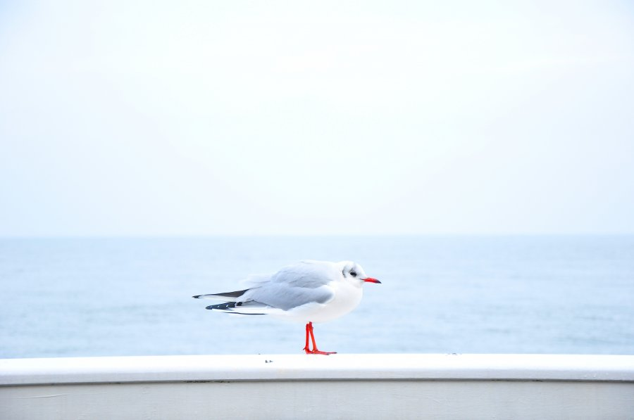 Free Photos: Seagull sitting on wall near the sea | Animals | davide ragusa