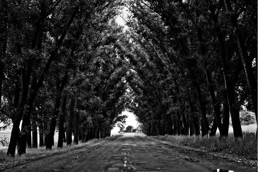 Free Photos: Road with trees on both sides | Art | Pavel Voinov