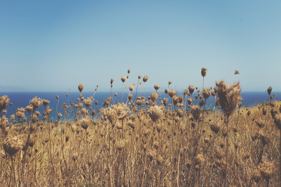 Free Photos: Dry vegetation near the sea | Nature | Jonas Nilsson Lee