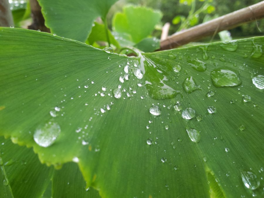 Free Photos: Raindrops on a leaf | Nature | Buzo Jesús