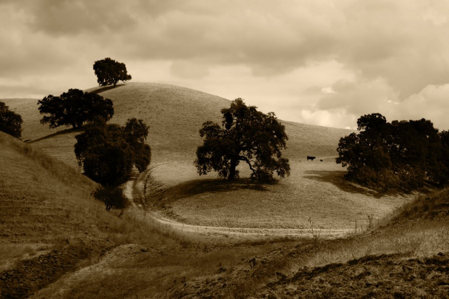 Free Photos: Landscape with trees on hills on a cloudy day | Backgrounds | Noel Lopez