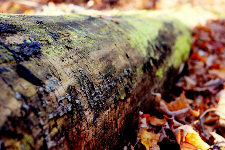 Free Photos: Tree trunk on the ground among dry leaves | Art | Chloe Benko-Prieur