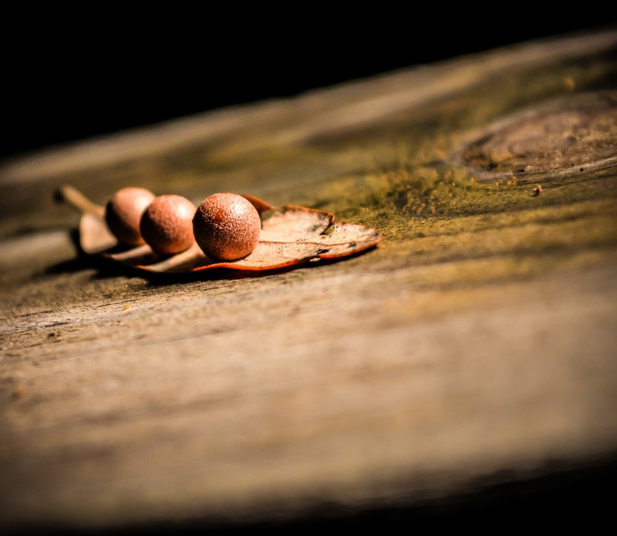 Free Photos: Seedpod | Nature | Steve Richey