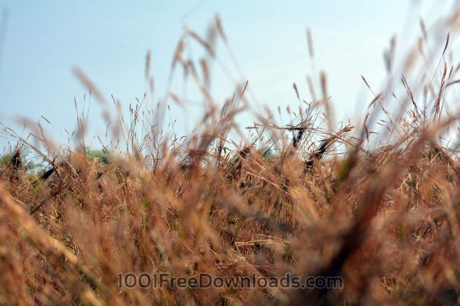 Free Photos: Dry Grass | Backgrounds