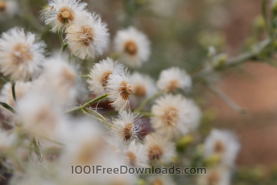 Free Photos: White flowers defocused | Abstract
