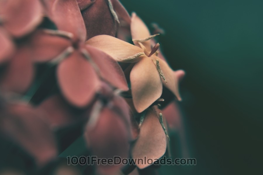 Free Photos: Flowers desaturated | Backgrounds