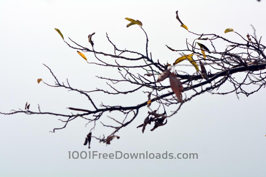 Free Photos: Spring Season | Abstract