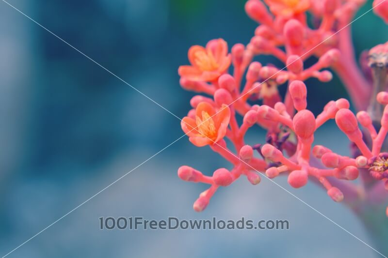 Free Photos: Red Flower | Backgrounds