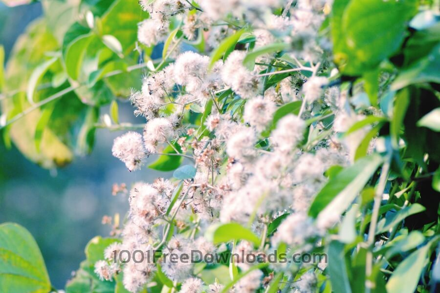 Free Photos: White Flowers | Backgrounds
