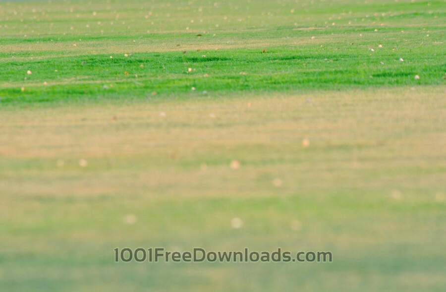 Free Photos: Green Grass Blur | Nature