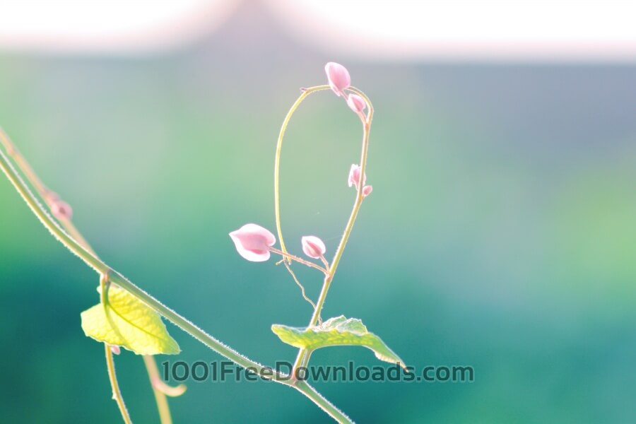 Free Photos: Pink flowers close up | Backgrounds