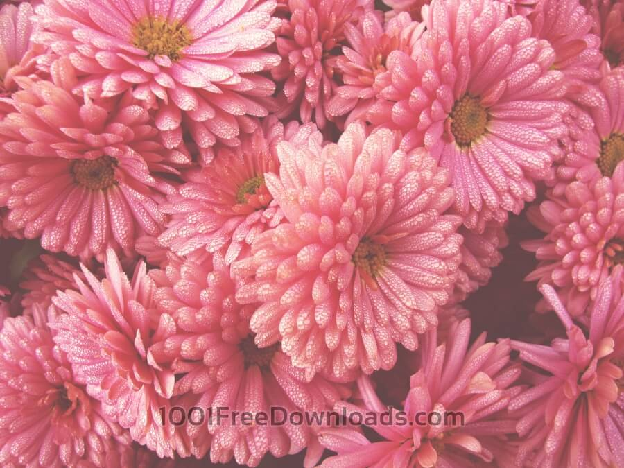 Free Photos: Close-up flowers | Backgrounds