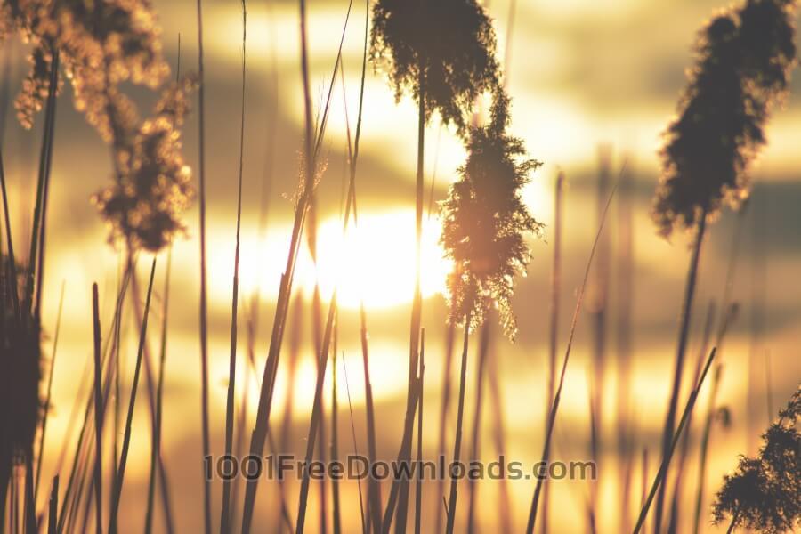 Free Photos: Close-up reeds | Backgrounds