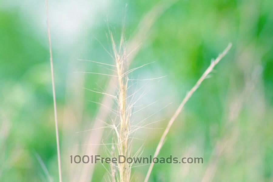 Free Photos: Green Grass in Morning | Nature