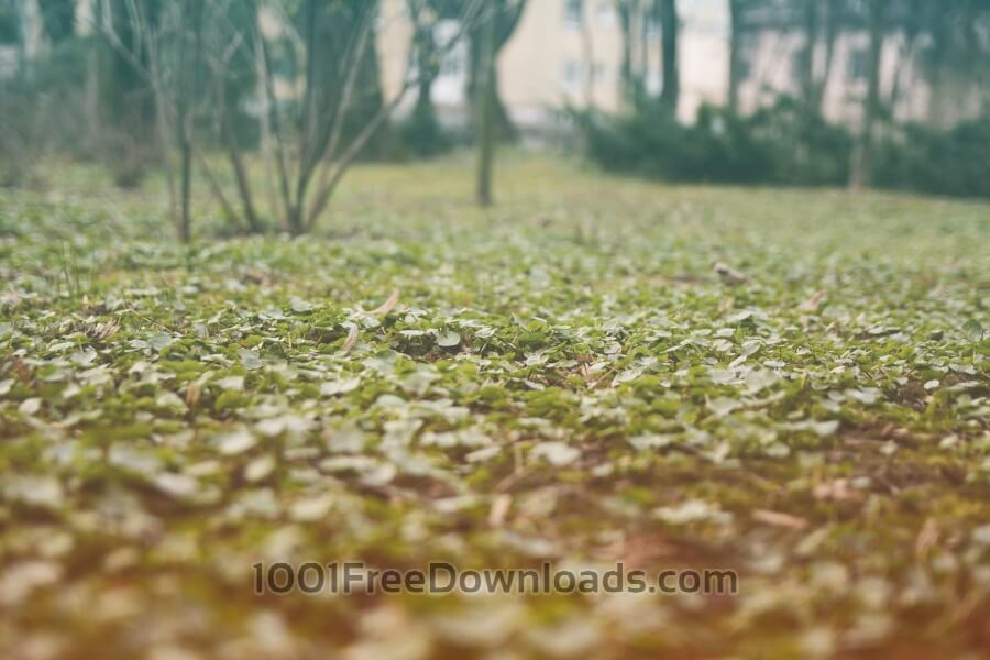 Free Photos: Forest close up grass | Backgrounds