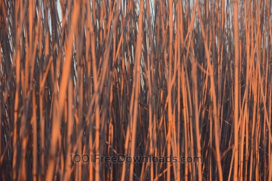 Free Photos: Close up reeds | Abstract