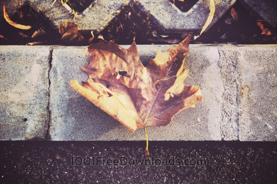Free Photos: Close up leaf | Backgrounds