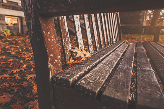 Free Old wooden bench surrounded by yellow leaves