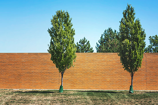 Free Trees near a wall