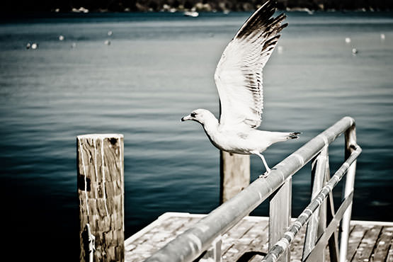 Free Seagull flying from the pier