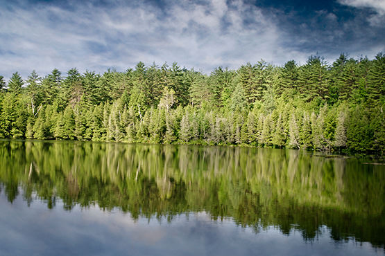 Free Green forest on the lake