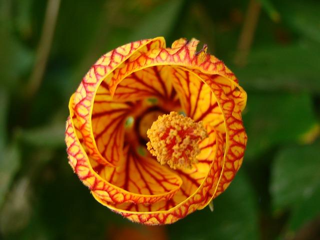 Free flower orange red nature texture