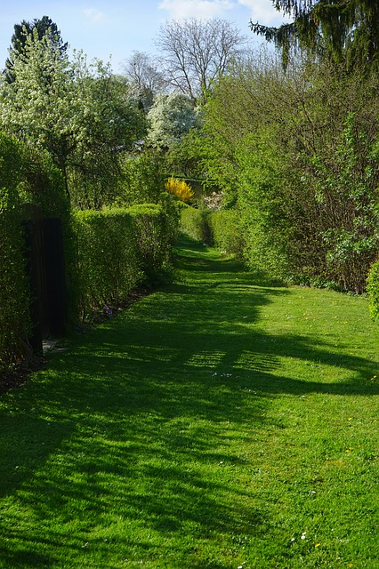 Free meadow away hedge path shrubs spring spring day