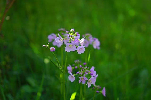 Free smock flowers light purple purple