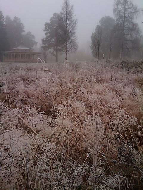Free grass frost bureå mist