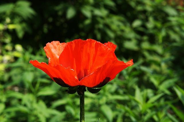 Free red flower garden flowers beauty macro