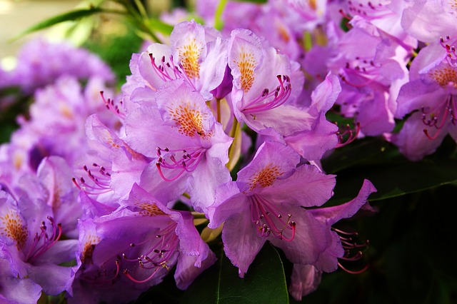Free flower garden flowers beauty macro