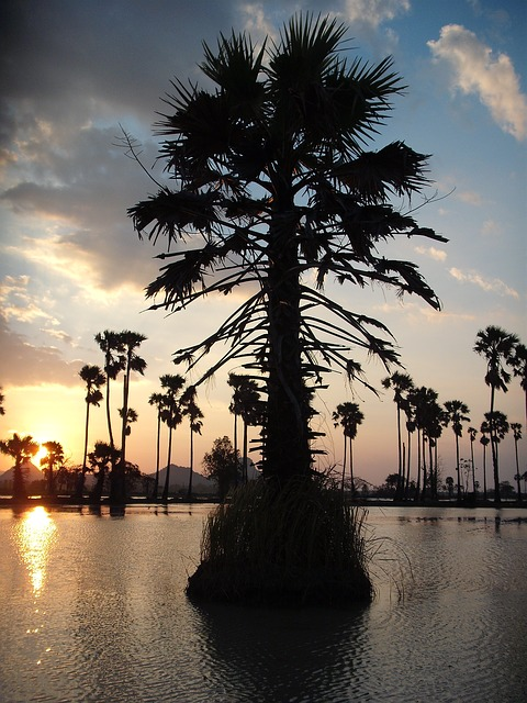 Free palm asia thailand landscape sunset see