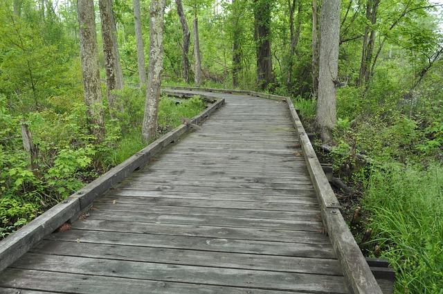 Free pedestrian bridge wood path forest