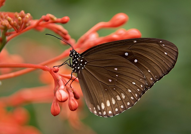 Free butterfly insect animal