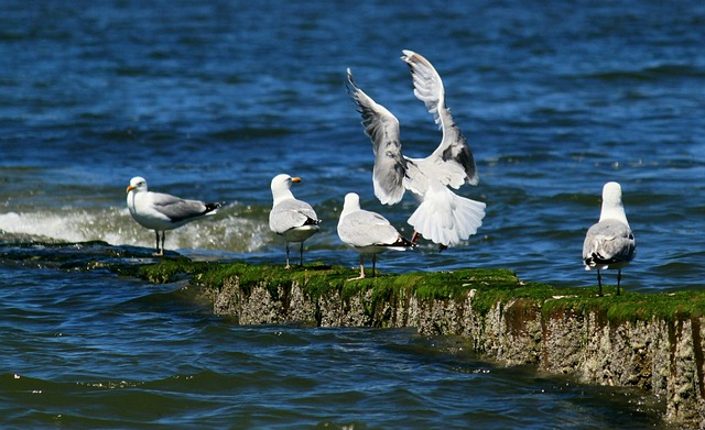 Free gulls bird birds coast animal critters animals