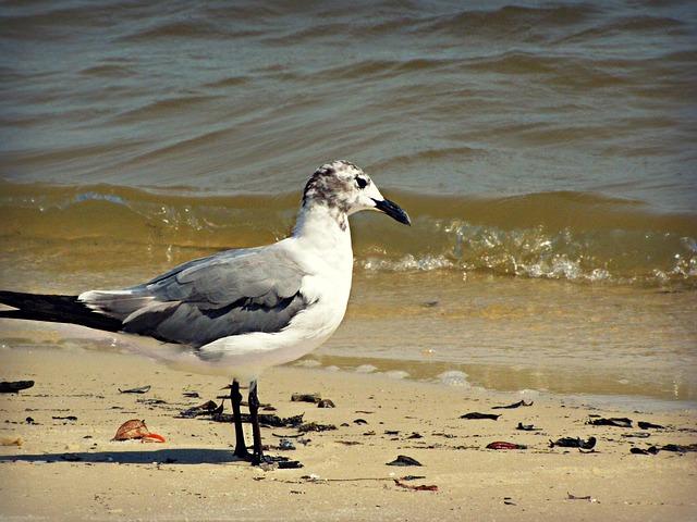 Free seagull gull bird beach water sand