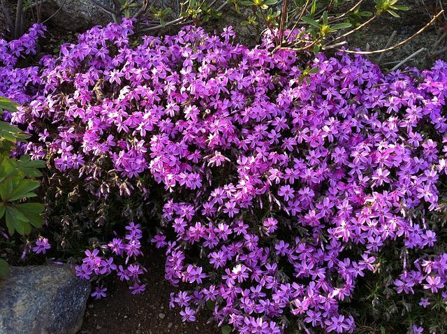 Free flowers purple purple flowers background