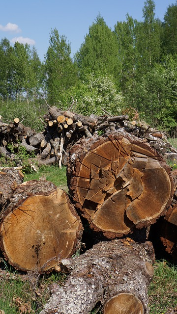 Free Photos: Log cutoffs tree wood industry felled tree | Merja Partanen