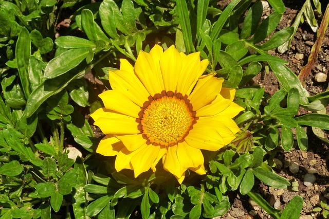 Free flower yellow spring botanical garden vienna