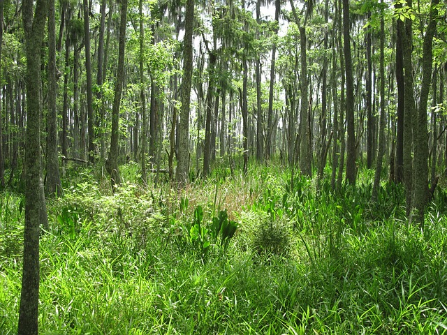 Free swamp marsh nature louisiana greenery trees