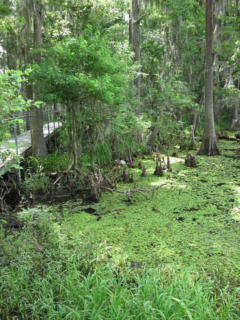 Free marsh swamp louisiana greenery nature