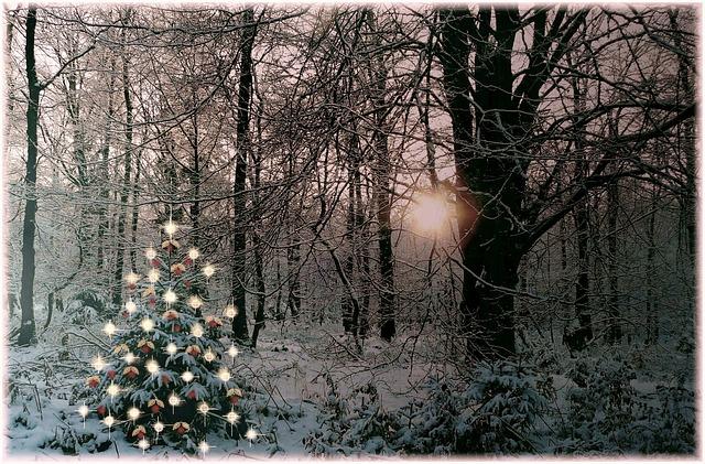Free christmas sparkle decoration fir branch