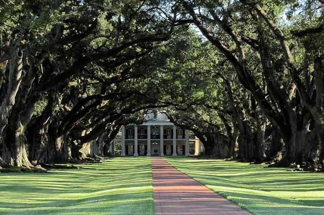 Free mansion alley oaks oak trees louisiana america
