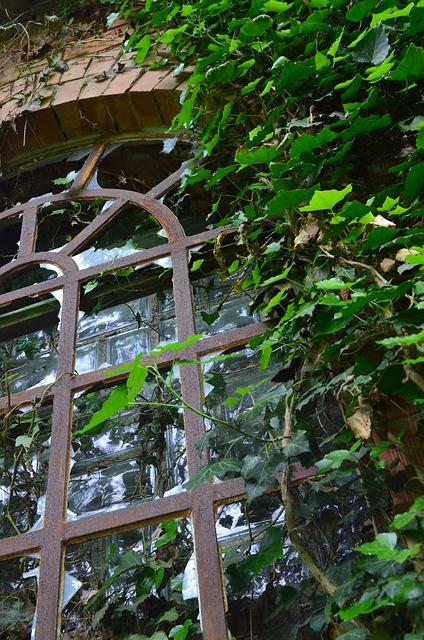 Free window ruin haunting verwuchert
