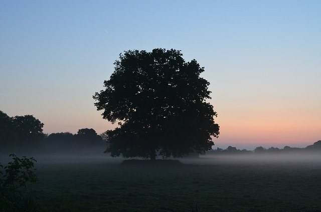 Free fog morgenstimmung fog bank sunrise