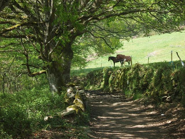 Free horse pets landscape nature