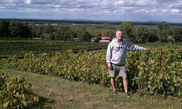 Free vineyards quebec vineyard romance canada person